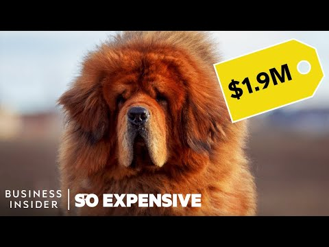 Why Pedigree Dogs Are So Expensive | So Expensive