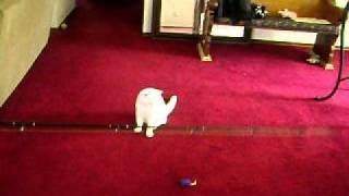 Funny Cat Video Part 1
