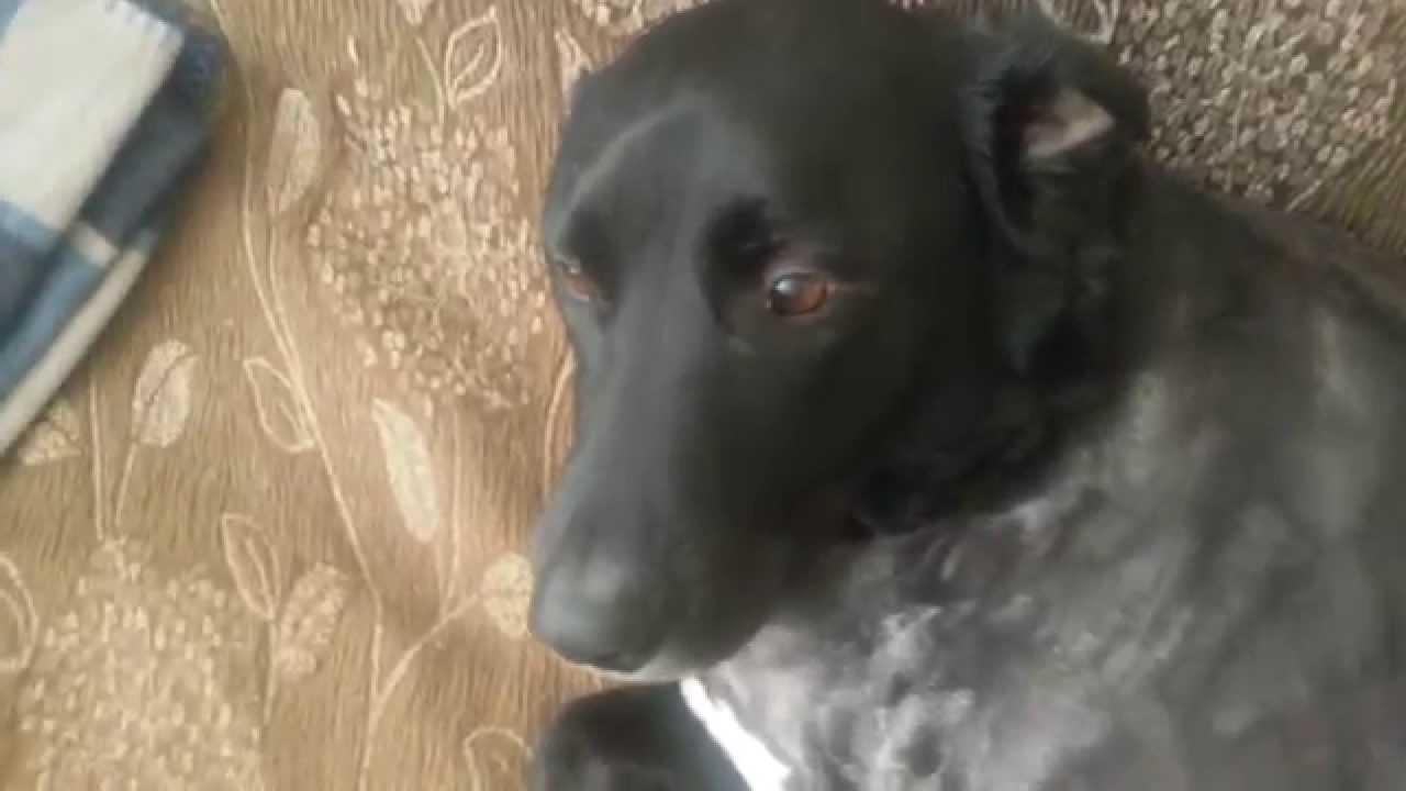 Sad Dog After Bad Haircut Youtube