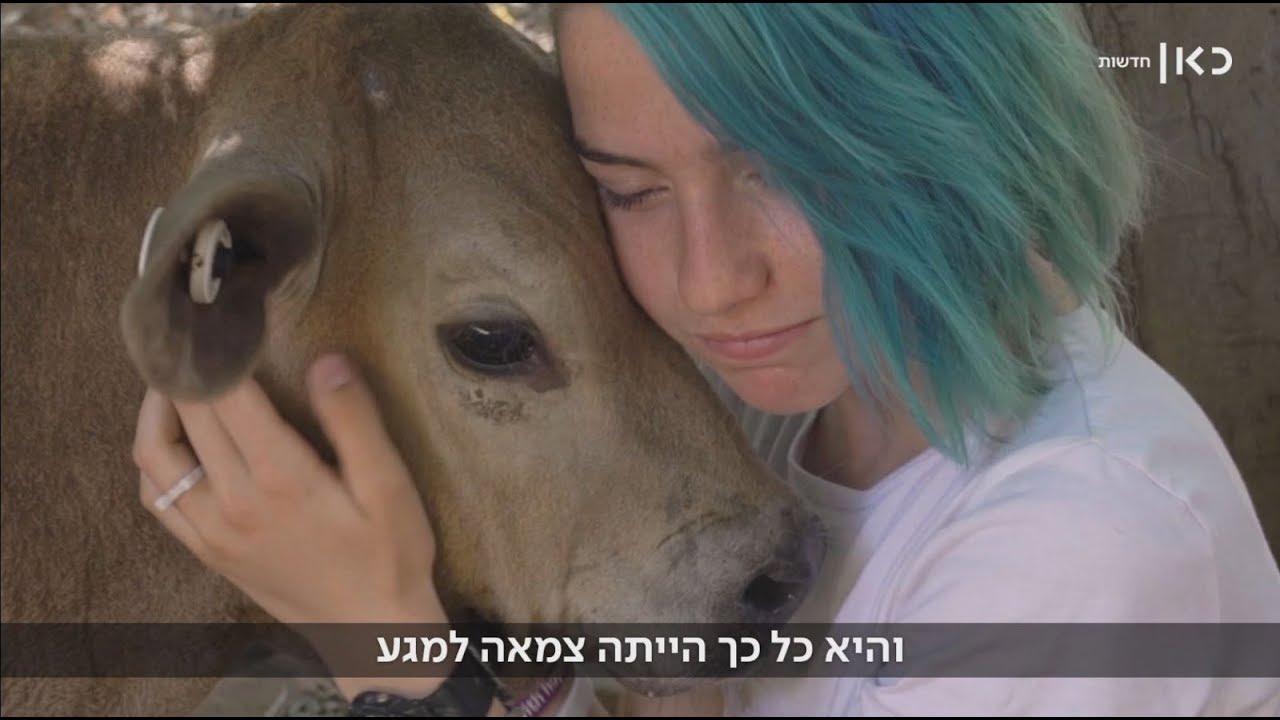 """""""הייעוד שלה הוא לא להיות סטייק"""": כך הצילה גלי בת ה-13 את תקווה הפרה"""