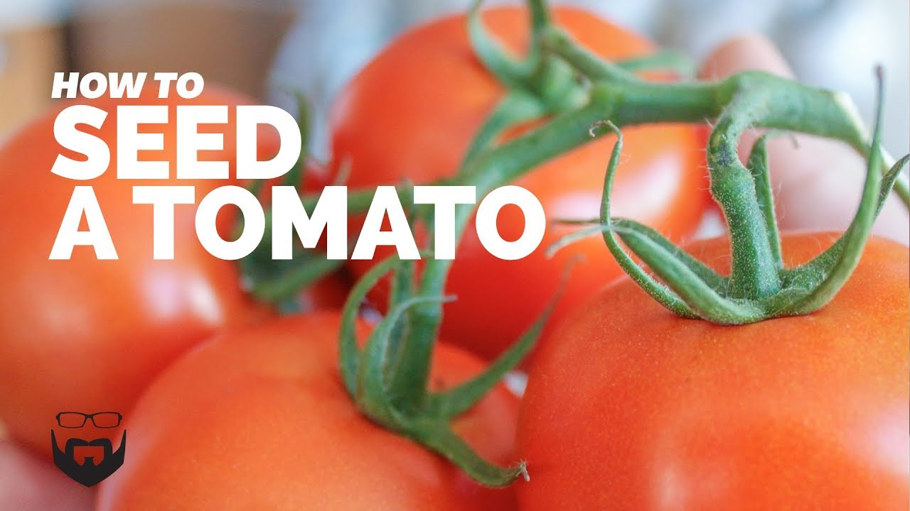 images How to Seed Tomatoes