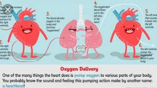 3 minute science-Heart by Kjara Veseli from MAK