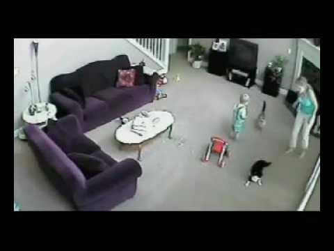 Cat defends baby from babysitter