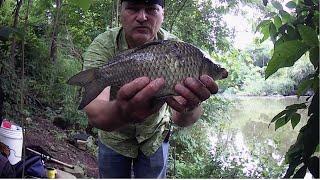 РЫБАЛКА НА ЛЕСНОМ ОЗЕРЕ КИЛОГРАМОВЫЕ КАРАСИ рыбалка2021 карась лесноеозеро fishing cruciancarp