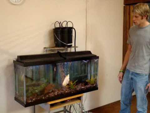 Aquaponics With Oscar Fish Pt. 2