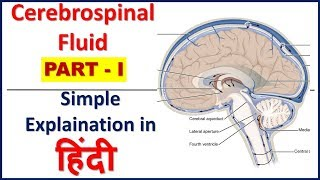 Cerebrospinal fluid -Composition, function, production & circulation(PART I)in Hindi|Bhushan Science