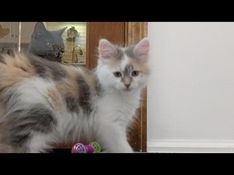 Kitten Close Up 2017-05-13