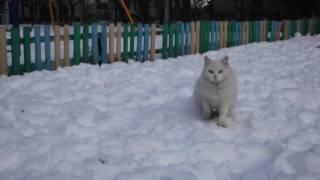 Хорёк и кошка гуляют по снегу