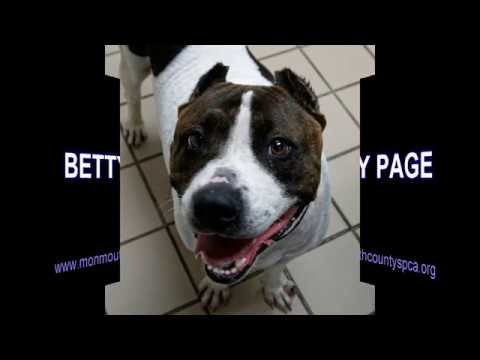 11 21 17 Pet of the Week Betty Page