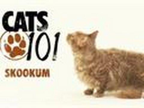 Skookum | Cats 101