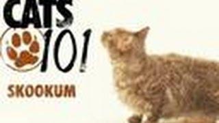 Skookum   Cats 101
