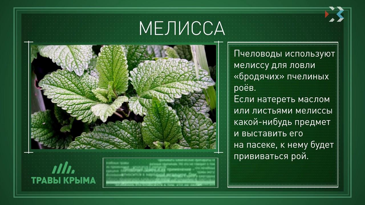 лекарственные травы крыма фото и описание сложнее имя