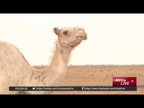 20956 nations Welt CCTV Afrique Mauritania Series 3׃ Many Syrian refugeeschoose to stay and rebuild