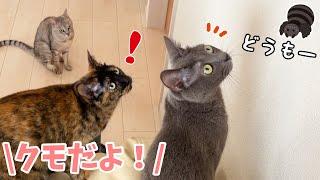 クモさんが家に遊びに来たときの猫たちの反応