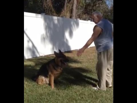 Long Distance Stay & Come Dog Training Command with No Leash