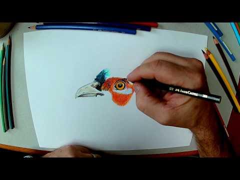 Rysowanie bażanta kredkami / How to draw a pheasant with crayons