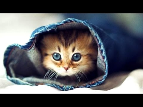 Funny Talking Cat Video Compilation [!NEW 2016!] - Best Talking Cats Of 2016