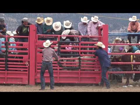 Circle Y Bull Riding Challenge