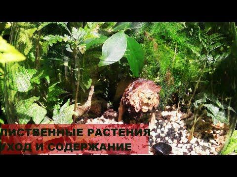 Секреты о флорариуме. Комнатные цветы уход в домашних условиях часть 1. #Фикусы, #бонсай