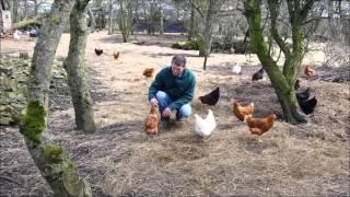 Durham Hens Fertile Hatching Eggs