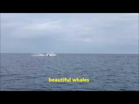 Huge Whales In Noumea, New Caledonia ปลาวาฬในประเทศนิวแคลิโดเนีย (นูเมอา)