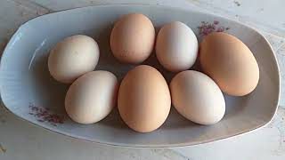 Tavuklar yumurtlamıyor sa çok basit ve kolay nasıl yumurtlatılır,