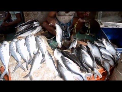 Fresh Fish Market in New Delhi, India