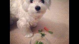 Doggy Salad For Paimei