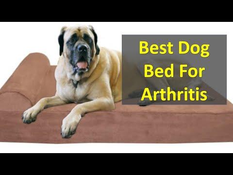 best-dog-bed-arthritis-|-best-dog-bed-for-hip-dyspepsia