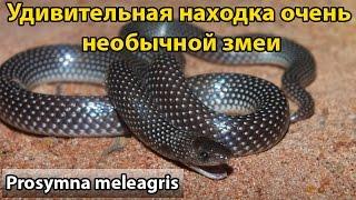 видео Яичные змеи