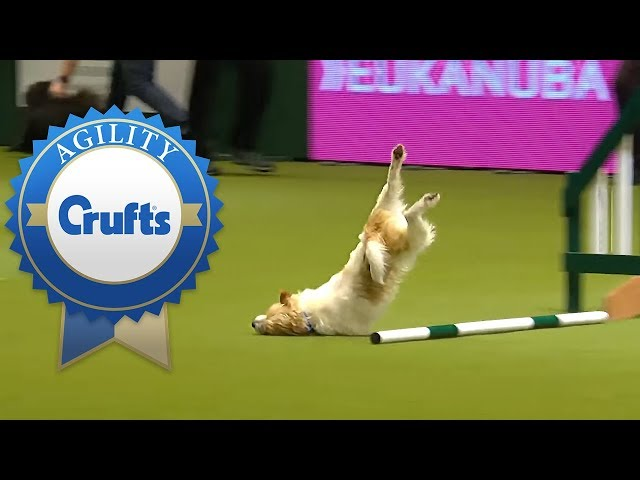Hilarious Olly the Jack Russell Goes Crazy in 2016 & 2017!