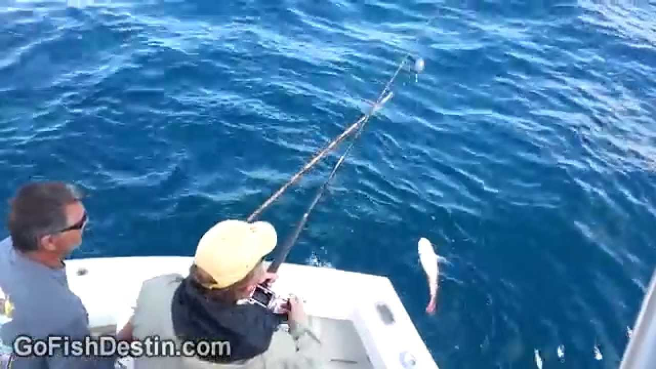 Destin florida fishing 2013 gag grouper amberjack red for Destin fl fishing