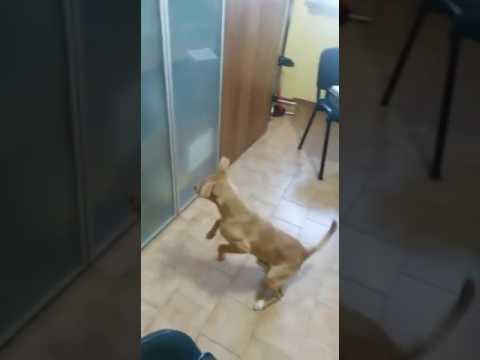 Il mio cane parla allo specchio youtube - Cane allo specchio ...