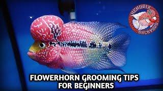 Flowerhorn GROOMing tips for BEGINNERS (tagalog)