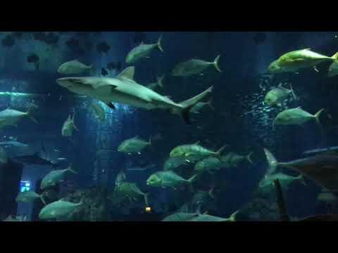 The Lost chambers aquarium, Atlantis, Palm Jumeirah, Dubai