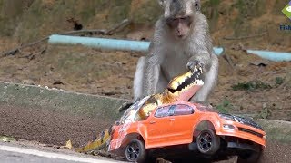 How to have fun with animals - Amazing Monkey playing RC truck with crocodile