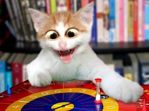 Лучшие приколы с кошками смотреть онлайн видео от Кошки в