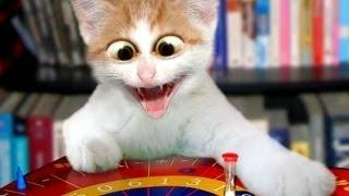 Эти смешные кошки ,приколы с животными.