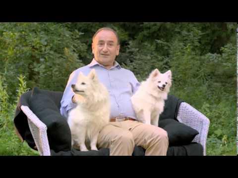 Собаки карликовых пород -- рекомендации Purina