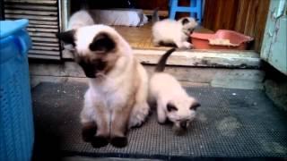 Кошачий семья 2015.09.26