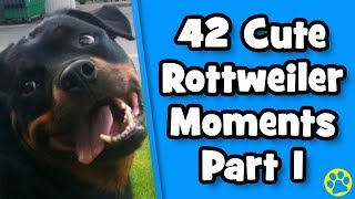 Ultimate Cute Rottweiler Compilation #1 | Best Of Funny Rottweiler Videos