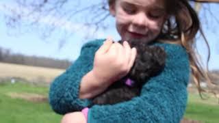 June  Johnny 2/20/21 Lakeland Puppies 6 weeks old