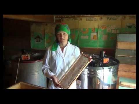 Найти его настоящий пчелиный мёд можно на пасеках, выставках или в интернете. Последний вариант позволит купить продукт недорого с доставкой.