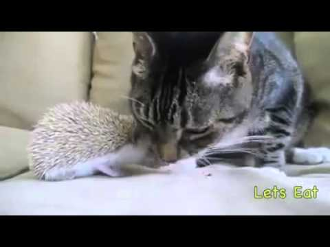 Cat, hedgehog and dog are best friends! | funny video