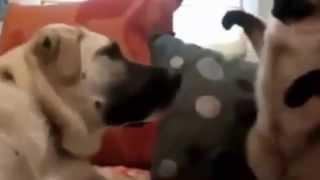 Видео_приколы_с_кошками!