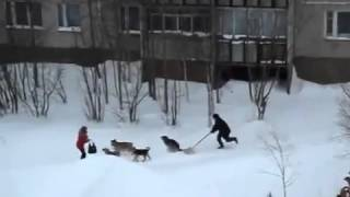мужик с лопатой разогнал собак, спас девушку