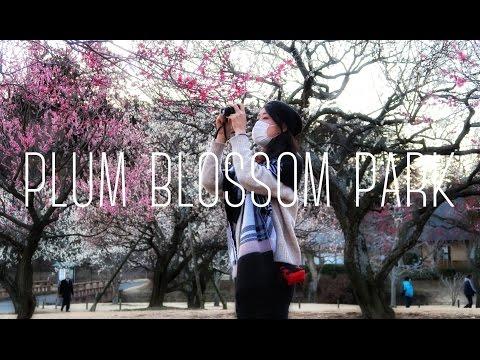 Plum Blossom Diary | Kairakuen Park 偕楽園