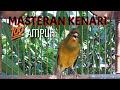 Masteran Kenari Ampuh Hanya Sekali Play Pancingan Kenari  Mp3 - Mp4 Download