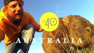 Road Trip: Tasmanien - Kangaroos & Wombats - AUSTRALIEN - LESS WORK / MORE TRAVEL