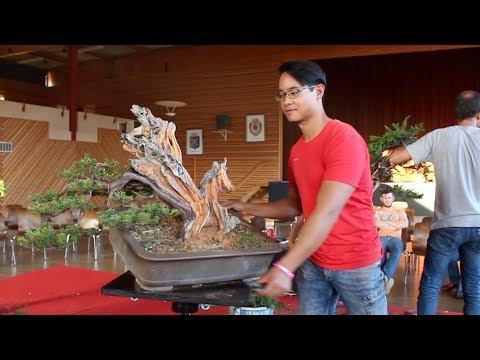 Michael Tran creating a Taxus Bonsai